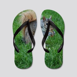 Squirrel in a Field Flip Flops
